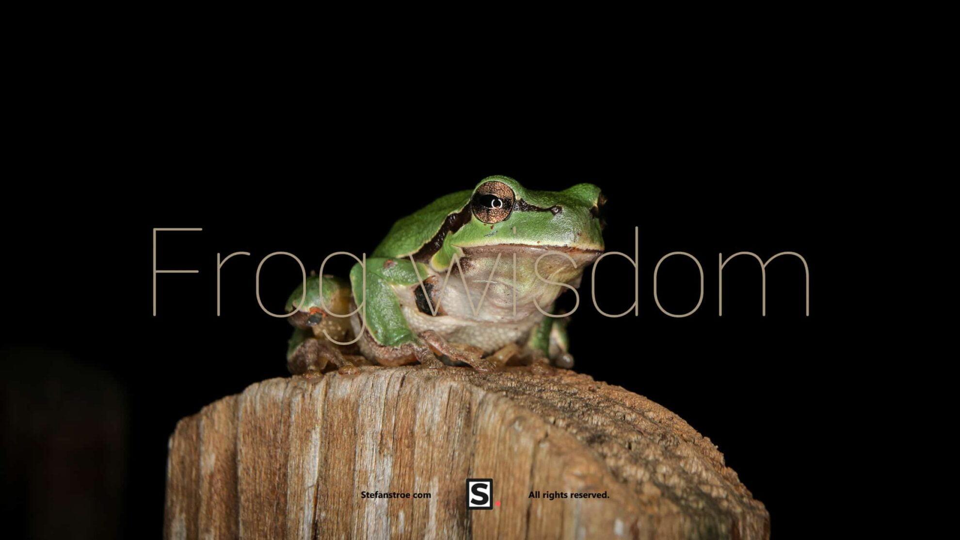 frog-wisdom
