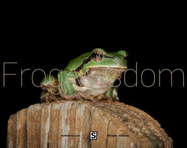 Frog on the fence